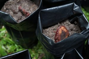 Seed planted in soil in a bag at World Earth Day